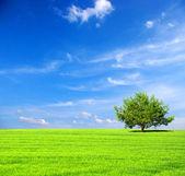 Поле с деревом — Стоковое фото