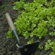 Stock Photo: Small hand garden tool