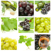 Set of different grapes — Stock Photo