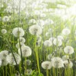 Flower field — Stockfoto #2859709