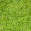 Grass — Stock Photo #2862339