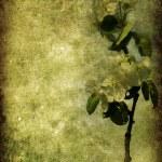 Vintage floral background — Stock Photo #3134278