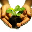 Hands and plant - Stock Photo