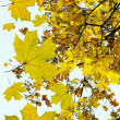 Leaves - Stockfoto