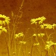 GRUNGE FIELD OF DAISY FLOWERS - Stockfoto