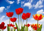 Krásný jarní květiny — Stock fotografie