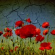 Grunge poppies background - Stockfoto