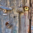 Old wooden door with three bells — Stock Photo