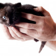 Little cute kitten — Stock Photo #3434382