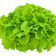 Leaves of lettuce — Stock Photo