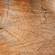 Cut tree — Stock Photo #3165777