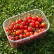 Stock Photo: Red freshly picked tomatoes
