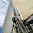 White sail - Stock Photo