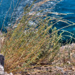 Bush grass on the rocky shore — Stock Photo
