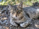 кот в траве — Стоковое фото