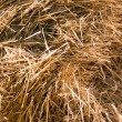 Haulm texture - Stock Photo