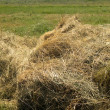 Stack of hay - Stock Photo