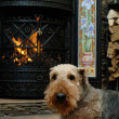 Dog by the fireplace - Stok fotoraf