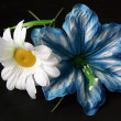 Two artificial flowers on black backgrou — Stock Photo