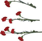 цветок гвоздика — Cтоковый вектор