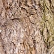 Old bark of tree texture detail - Stock Photo