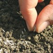 Stock Photo: Sowing seeds