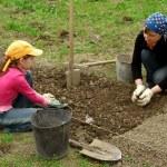 Gardening together — Stock Photo
