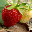 Strawberries — Stock Photo #3351112