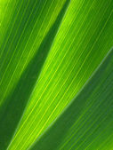 Green leaves — Stock fotografie