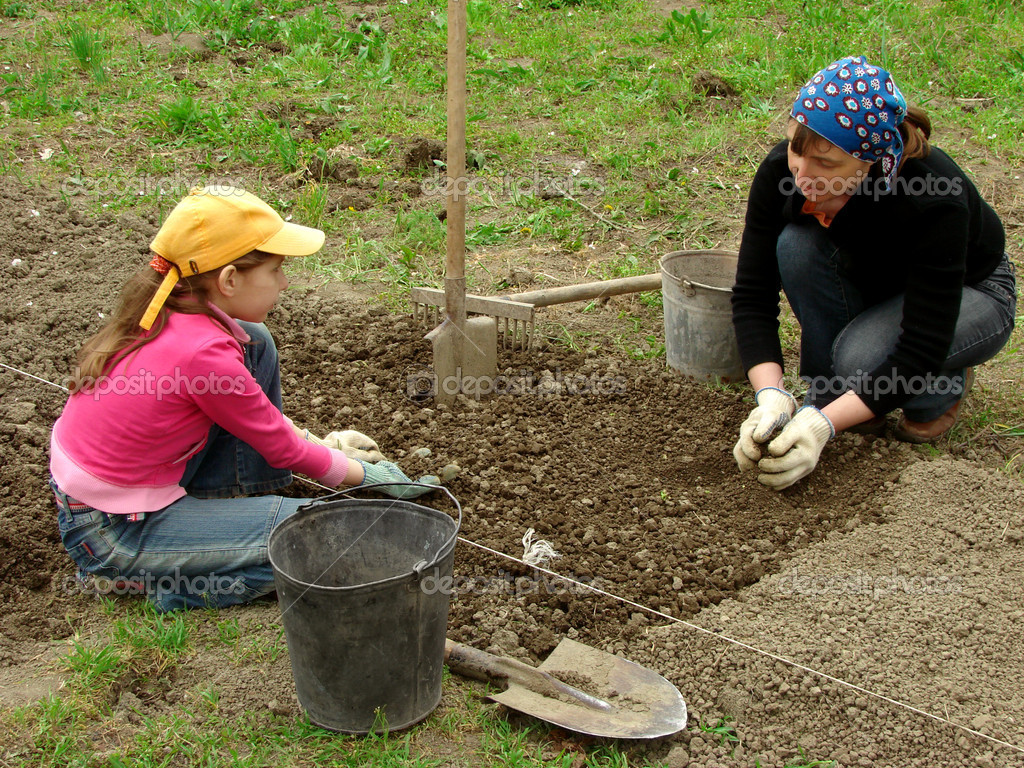 Mother and daughter preparing vegetable bed for planting together                        Stock Photo #3350684