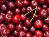 Uprawy wiśni — Zdjęcie stockowe