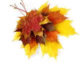 红叶的季节去 — Stock fotografie