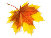 Pair of autumnal leaves — Stock Photo