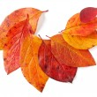 Autumnal leaves — Stock Photo #3438096