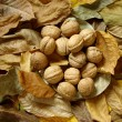 Leaves and nuts — Stock Photo