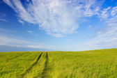 Summer landscape — Stock Photo