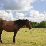 Horse pasture — Stock Photo #3058928