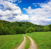 Road to the forest — Stock Photo