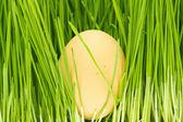 Ovos de galinha, grama — Foto Stock