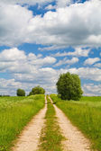 Road through the meadow — Stock Photo
