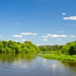 Летом река — Стоковое фото