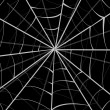 Spider web - Foto Stock