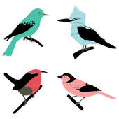 Different birds — Stock Photo