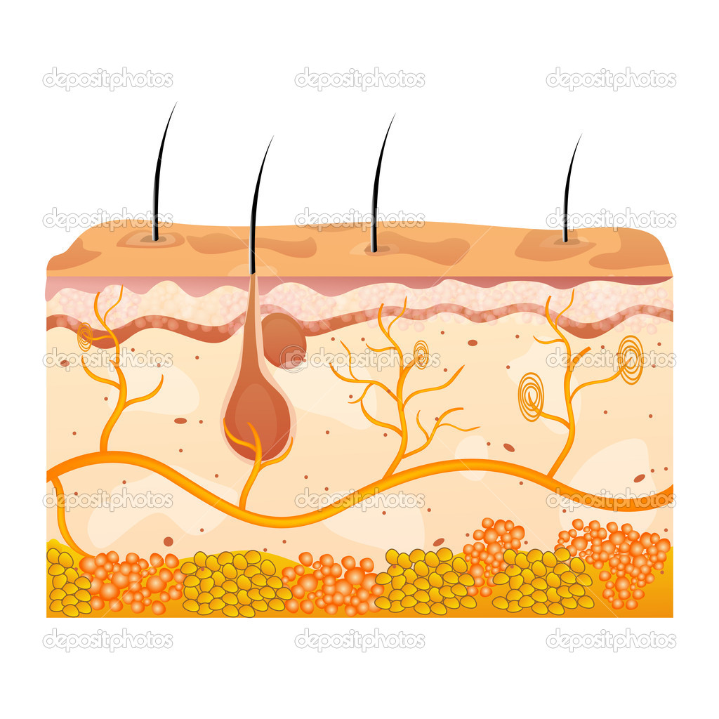 Illustration of skin cells on white background  Stock Photo #4583685