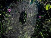 Web. Drops. — Stock Photo