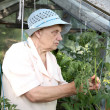 The old woman in a hothouse at bushes - Stock Photo