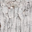 Structure of the old cracked paint - Photo