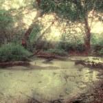 ������, ������: Swamp moorland