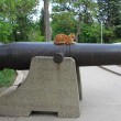 :Cat on a cannon — Stock Photo