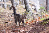 Walking cat — Stockfoto